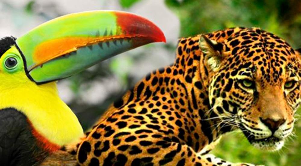 Photo du Circuit au Mexique : Nature et Animaux du Mexique