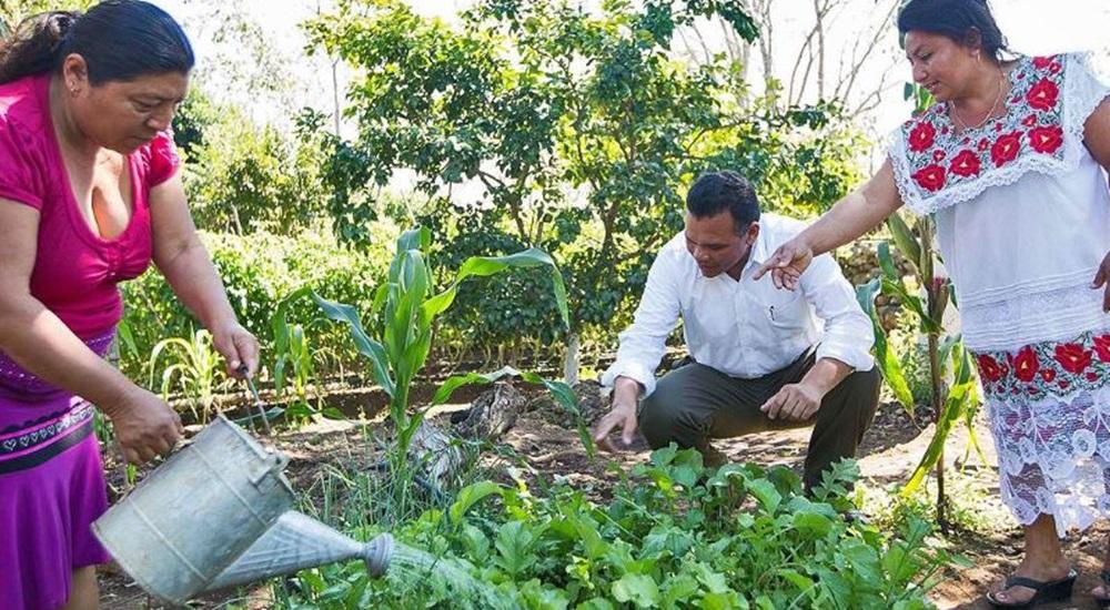 visiter la communauté de nuevo durango au yucatan