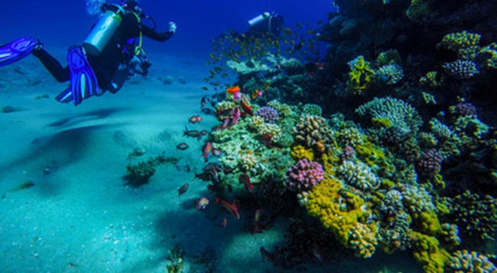 voyage plongée au Mexique