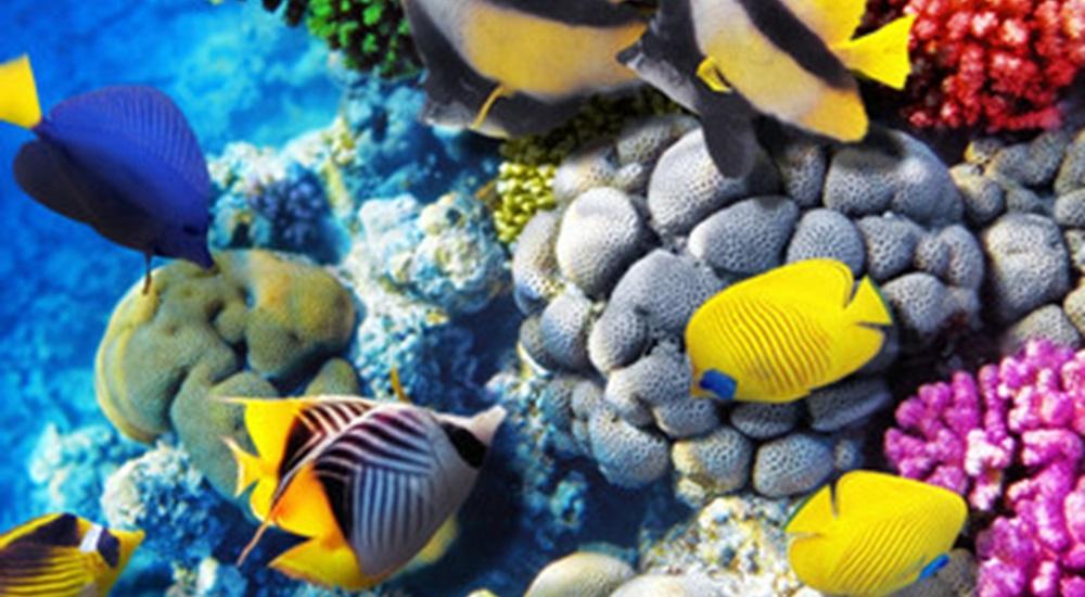 voir des poissons tropicaux pendant son voyage au Mexique