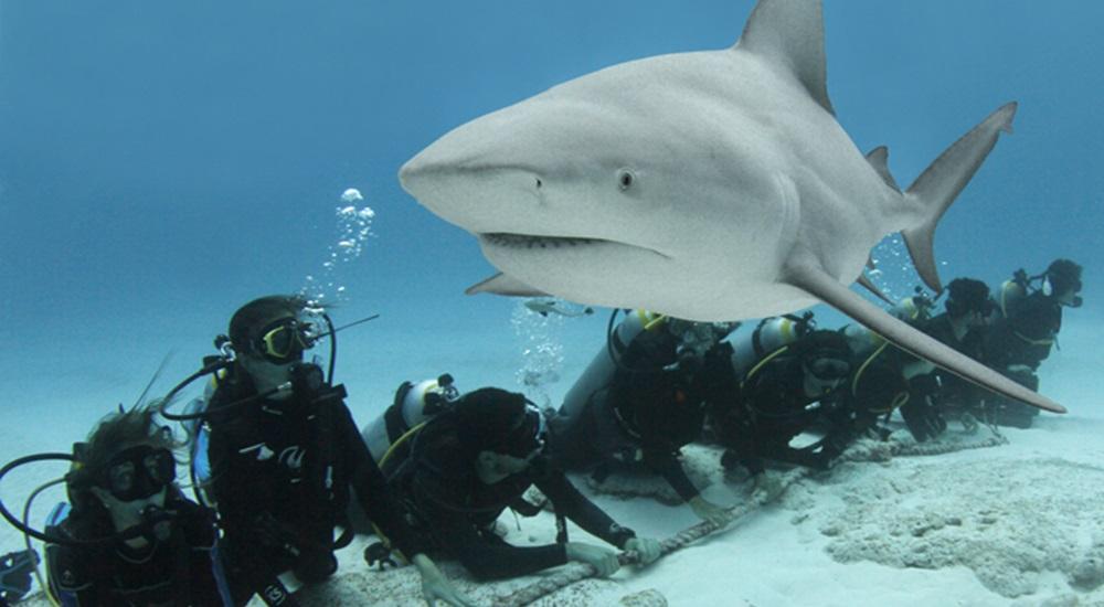 plonger avec les requins au Mexique