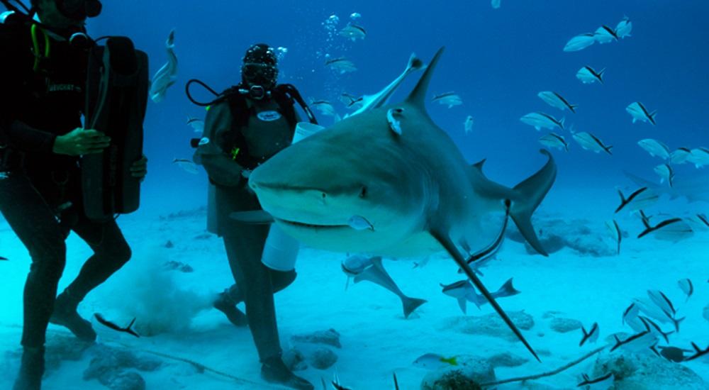 voyage plongée avec les requins du Mexique