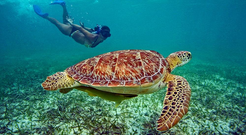 nager avec les tortues pendant son circuit au Yucatan