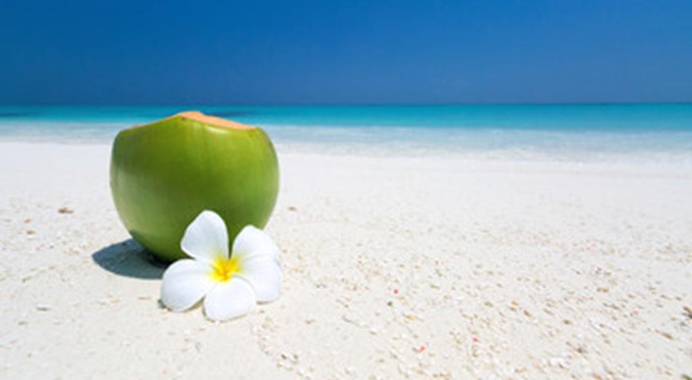 coco sur la plage à holbox