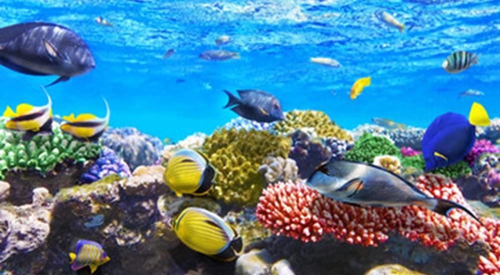 voir des poissons tropicaux pendant un autour a cuba