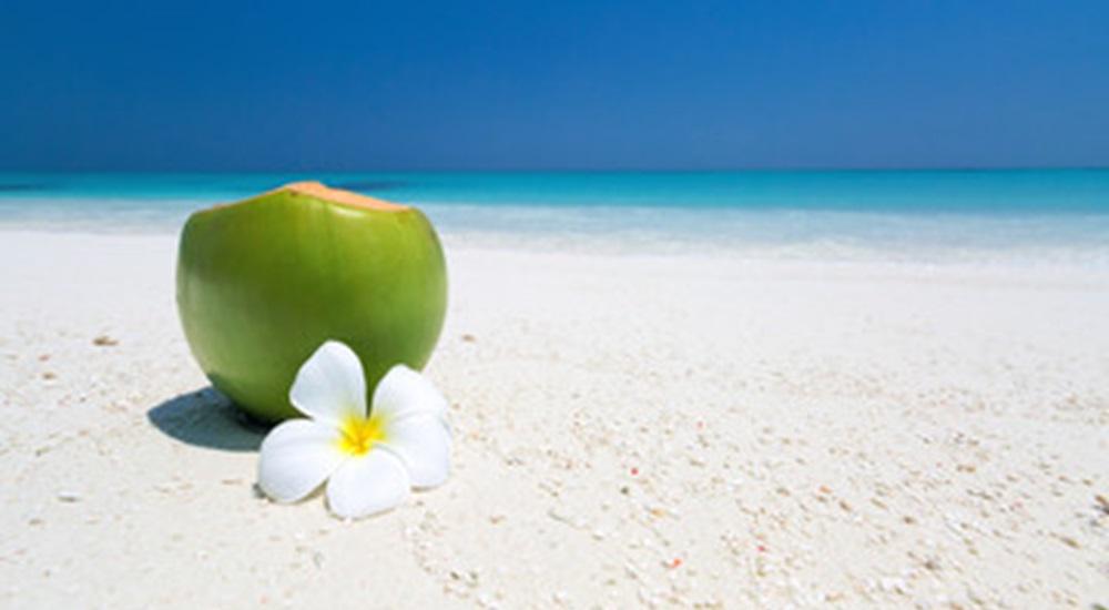 cocotier sur la plage a cuba