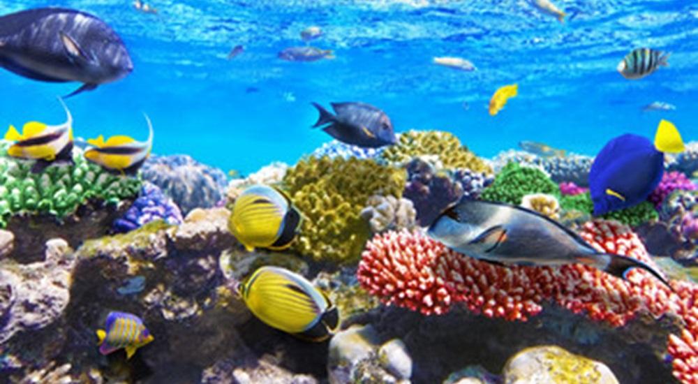 poissons tropicaux de la baie des cochons