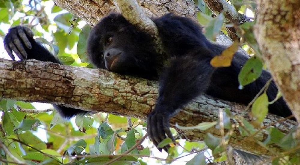 voyage au mexique pour voir des singes